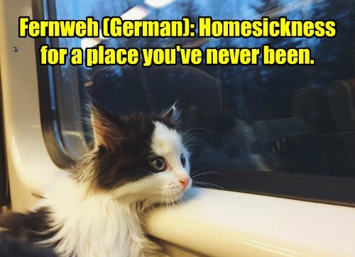 A word all homless cats know.