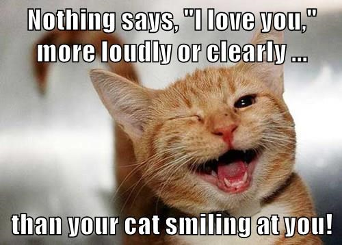 """Nothing says, """"I love you,"""" more loudly or clearly ...  than your cat smiling at you!"""