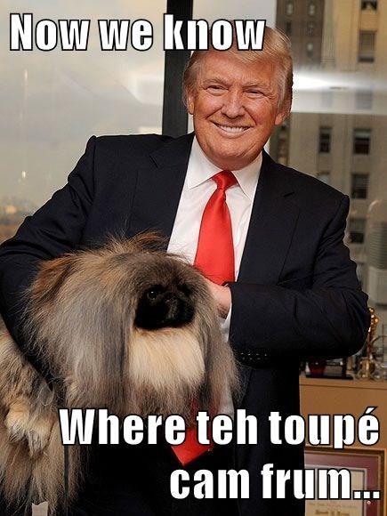 Now we know  Where teh toupé cam frum...