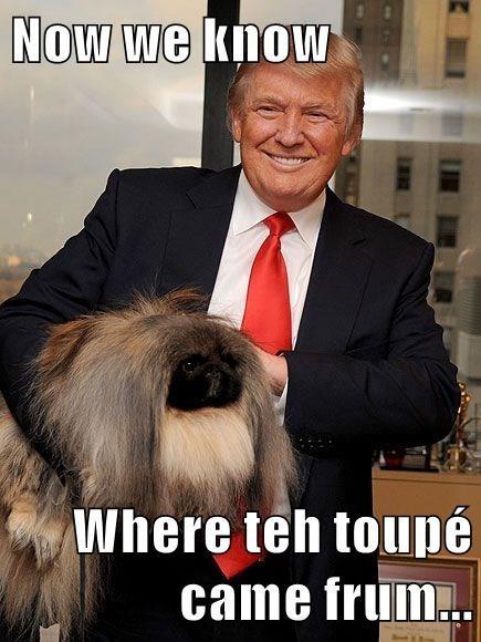 Now we know  Where teh toupé came frum...