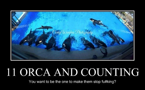 11 ORCA AND COUNTING
