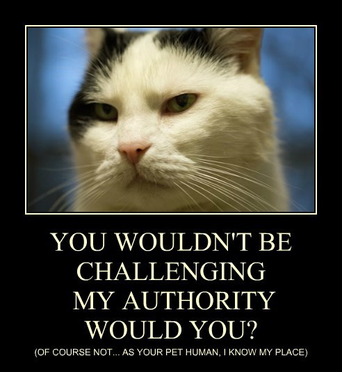 YOU WOULDN'T BE CHALLENGING  MY AUTHORITY WOULD YOU?