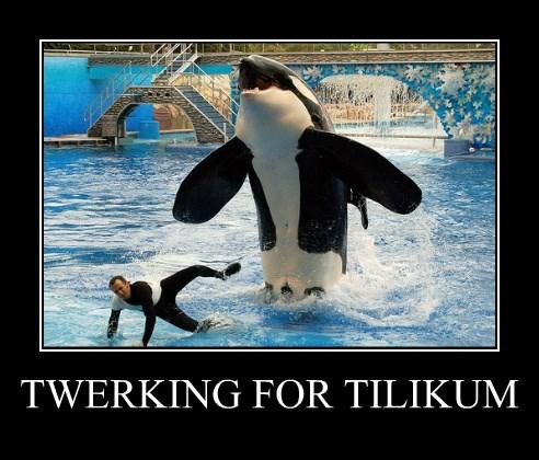 TWERKING FOR TILIKUM