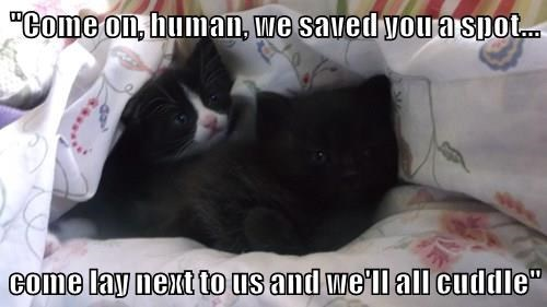 """""""Come on, human, we saved you a spot...  come lay next to us and we'll all cuddle"""""""