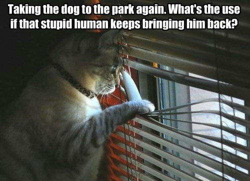 Taking the dog to the park again. What's the use if that stupid human keeps bringing him back?