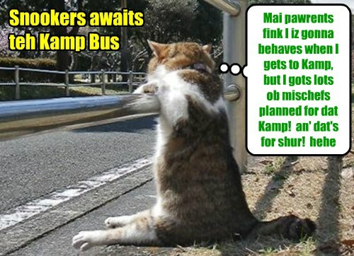 Dis Kamper eagerly awaits teh bus to Kamp.. an' hims iz really eager to make hiz mark der!
