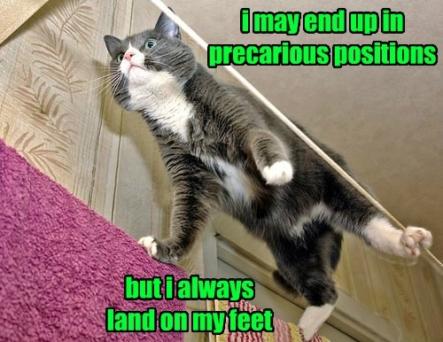 I Am Cat