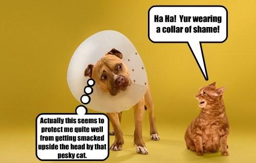Ha Ha!  Yur wearing a collar of shame!