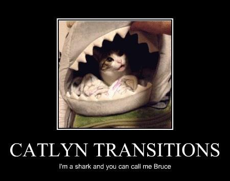 CATLYN TRANSITIONS
