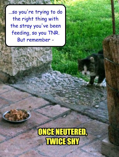 once neutered, twice shy