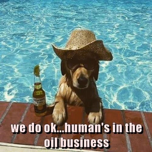 The Most Interesting Dog In The Pool