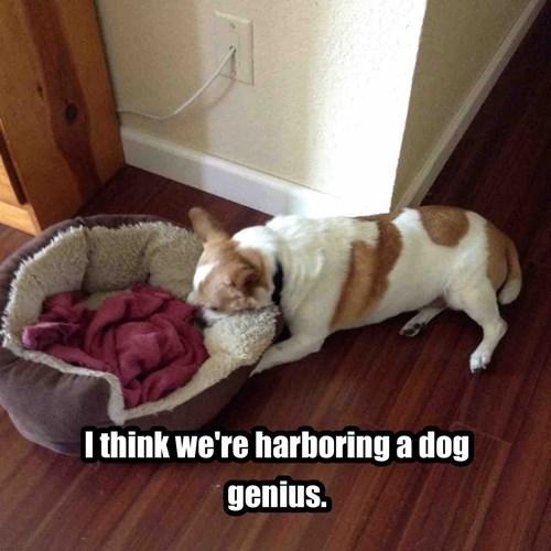 Um....dog?