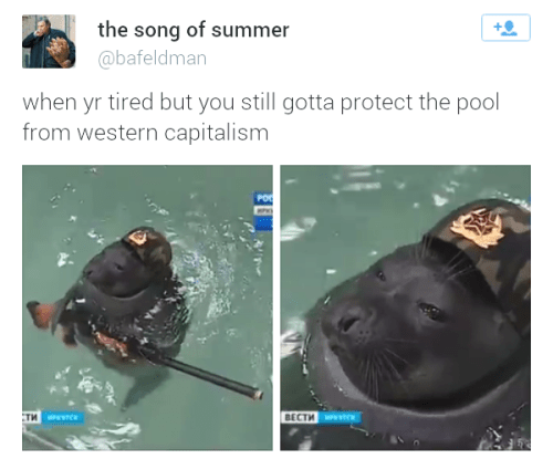 The Capitalist Pig-Dogs Will Never Take Our Pool