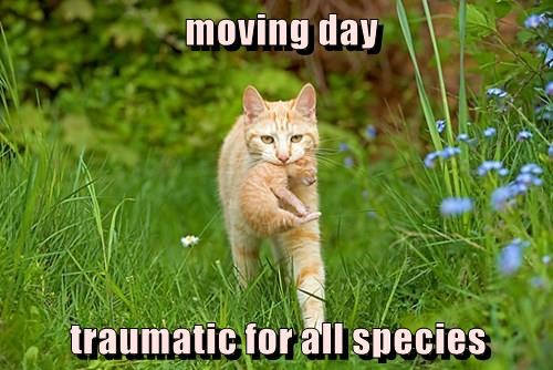 moving day  traumatic for all species