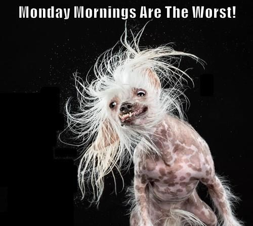 Monday Mornings Are The Worst!