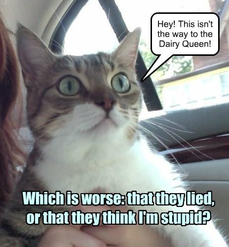 Damn! We're going to the vet.