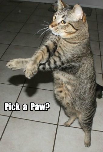 Pick  a  Paw?