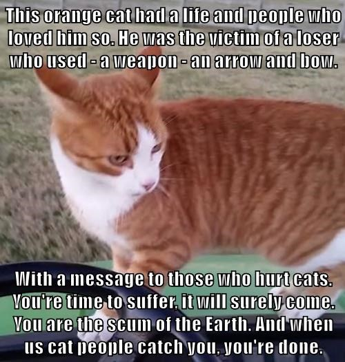 This orange cat had a life and people who loved him so. He was the victim of a loser who used - a weapon - an arrow and bow.  With a message to those who hurt cats. You're time to suffer, it will surely come. You are the scum of the Earth. And when us cat