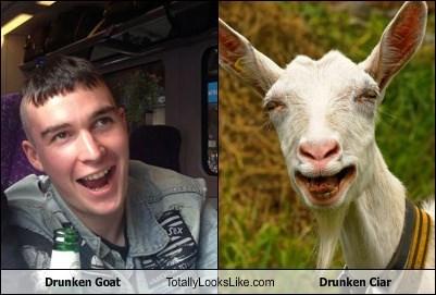 Drunken Goat Totally Looks Like Drunken Ciar