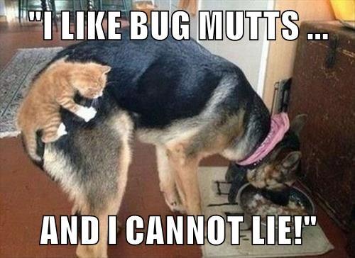 """""""I LIKE BUG MUTTS ...  AND I CANNOT LIE!"""""""