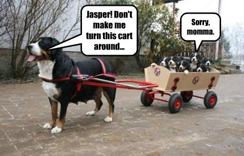 Jasper! Don't make me turn this cart around...