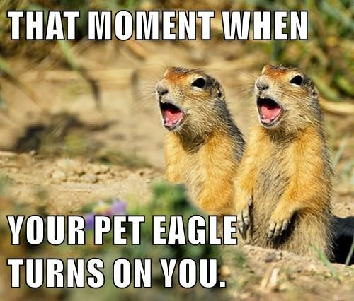 THAT MOMENT WHEN  YOUR PET EAGLE                                                TURNS ON YOU.