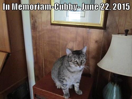 In Memoriam-Cubby- June 22, 2015