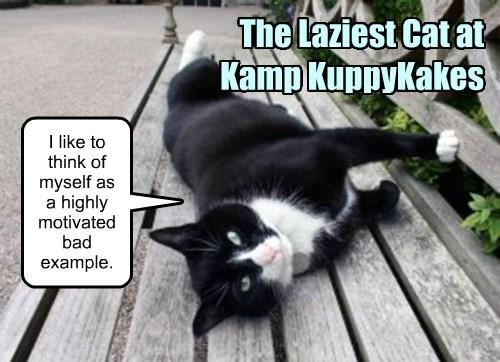 The Laziest Cat at Kamp KuppyKakes