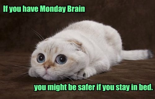 If you have Monday Brain                               you might be safer if you stay in bed.