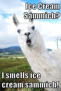 Ice Cream Sammich?   I smells ice cream sammich!