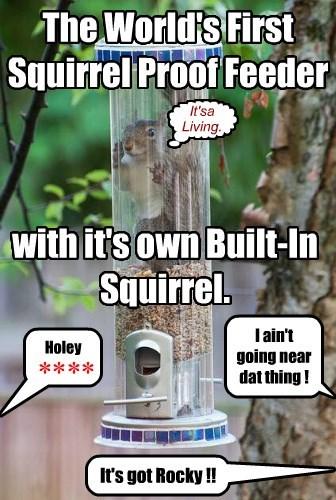 Squirrels HATE It