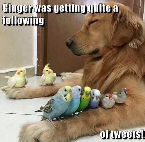 Ginger was getting quite a following  of tweets!