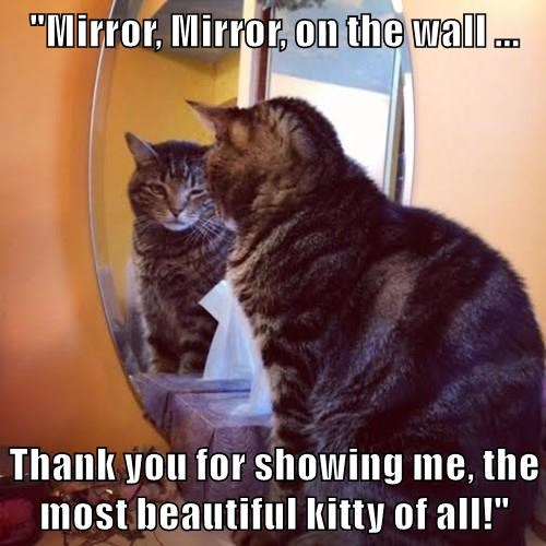 """Mirror, Mirror, on the wall ...  Thank you for showing me, the most beautiful kitty of all!"""
