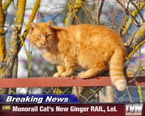 Breaking News - Monorail Cat's New Ginger RAIL, LoL