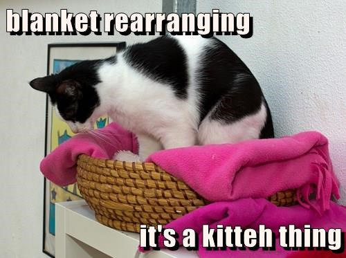 blanket rearranging  it's a kitteh thing