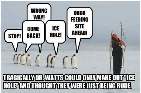 penguins,captions,funny