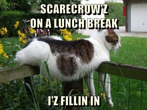 SCARECROW'Z                                           ON A LUNCH BREAK  I'Z FILLIN IN