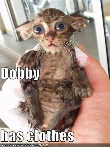 Dobby has clothes