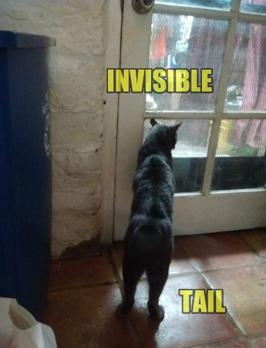 INVISIBLE TAIL