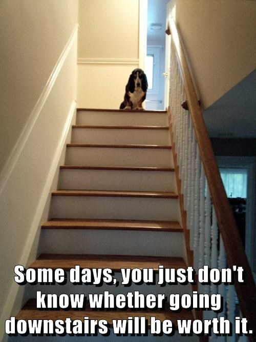 Some days, you just don't know whether going downstairs will be worth it.