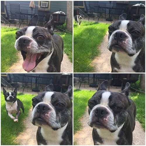 funny dogs image Oh... It's You