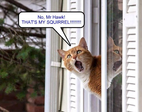 THAT'S MY SQUIRREL!!!!!!!!!
