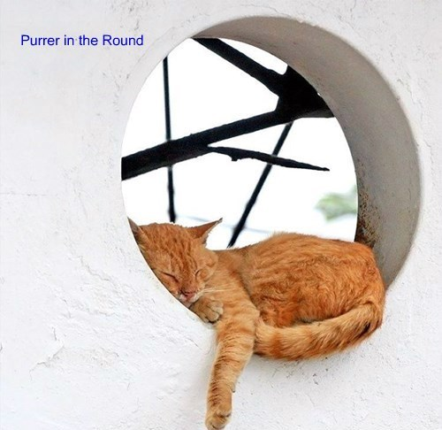 Purrer in the Round