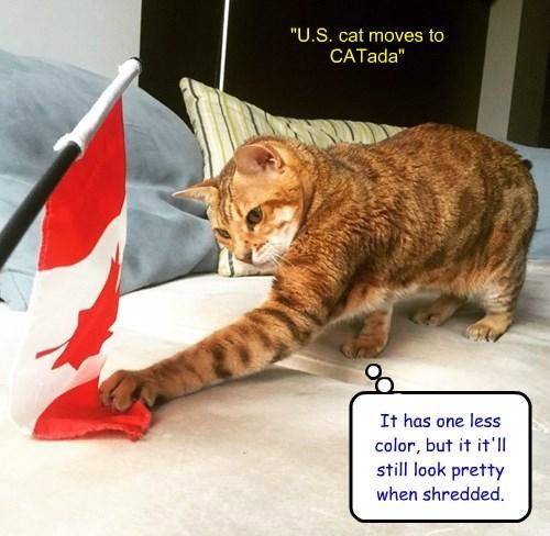"""""""U.S. cat moves to CATada"""""""