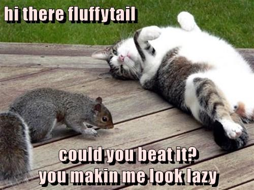 hi there fluffytail  could you beat it?                                               you makin me look lazy