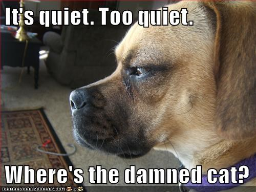 It's quiet. Too quiet.  Where's the damned cat?