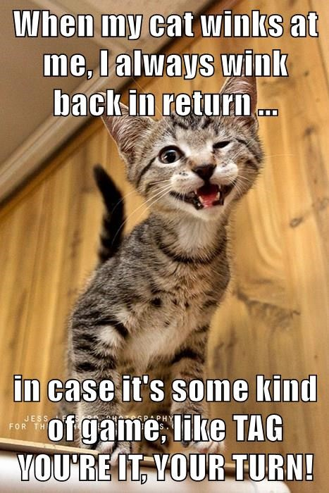 When my cat winks at me, I always wink back in return ...  in case it's some kind of game, like TAG YOU'RE IT, YOUR TURN!