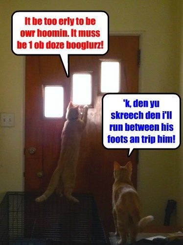 Always let your kitties know what you're doing!