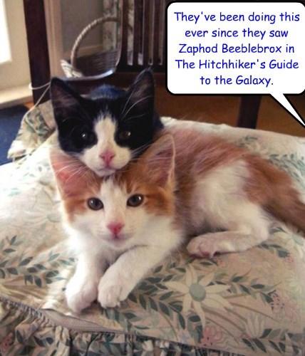 Zaphod kitties!