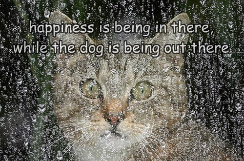 happiness is being in there, while the dog is being out there